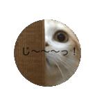 丸餅猫(個別スタンプ:23)