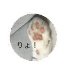 丸餅猫(個別スタンプ:24)