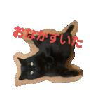 真顔ですがなにか?(黒猫2)(個別スタンプ:01)