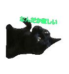 真顔ですがなにか?(黒猫2)(個別スタンプ:02)