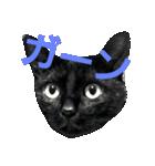 真顔ですがなにか?(黒猫2)(個別スタンプ:03)
