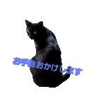 真顔ですがなにか?(黒猫2)(個別スタンプ:05)