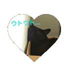 真顔ですがなにか?(黒猫2)(個別スタンプ:06)