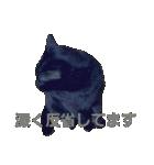 真顔ですがなにか?(黒猫2)(個別スタンプ:07)