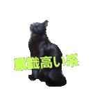 真顔ですがなにか?(黒猫2)(個別スタンプ:09)