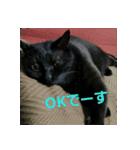 真顔ですがなにか?(黒猫2)(個別スタンプ:11)