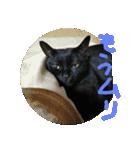 真顔ですがなにか?(黒猫2)(個別スタンプ:13)