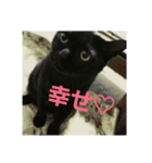 真顔ですがなにか?(黒猫2)(個別スタンプ:14)