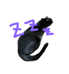 真顔ですがなにか?(黒猫2)(個別スタンプ:15)