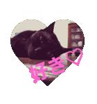 真顔ですがなにか?(黒猫2)(個別スタンプ:16)