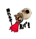 見習い猫舎(個別スタンプ:02)
