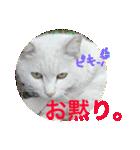 見習い猫舎(個別スタンプ:06)