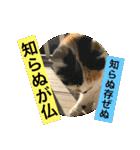見習い猫舎(個別スタンプ:08)