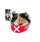 見習い猫舎(個別スタンプ:10)