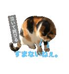 見習い猫舎(個別スタンプ:12)