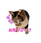 見習い猫舎(個別スタンプ:13)
