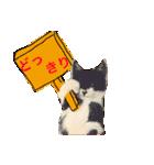 見習い猫舎(個別スタンプ:15)
