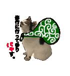 見習い猫舎(個別スタンプ:16)