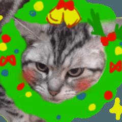 大人も子どもも♪冬猫のクリスマス&お正月