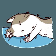 Litter Cat