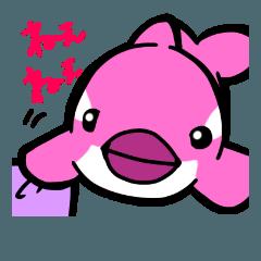 ピンクシャチゆめこ2