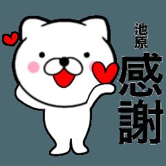 【池原】が使う主婦が作ったデカ文字ネコ