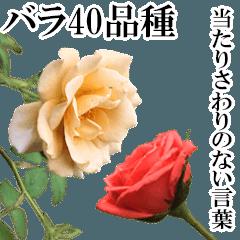薔薇(バラ)の花だけで40種『上品ローズ』