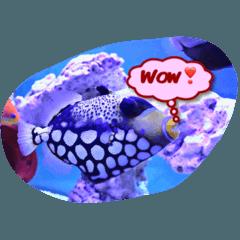 つぶやく海水魚たち②英語版