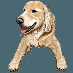 [LINEスタンプ] 優しい犬!3やさしくやさしく