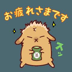 【うさぎ】アメリカンファジーロップ