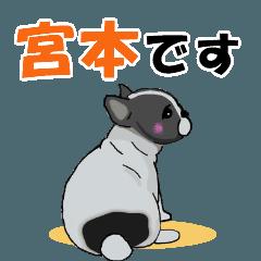 宮本さんが使う名前スタンプ・子犬イラスト