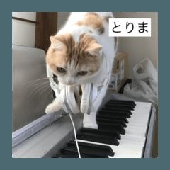 ゆるっと猫