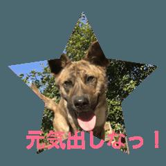 元気出して!(mix犬)