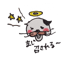 funny n cute cat