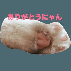 猫の肉球の写真を使った可愛いスタンプ。