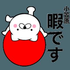 【小笠原】が使う主婦が作ったデカ文字ネコ