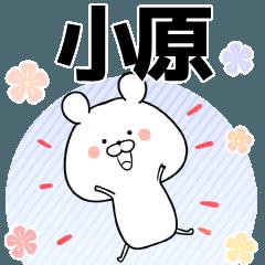[LINEスタンプ] 小原の元気な敬語入り名前スタンプ(40個入) (1)