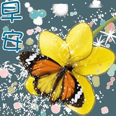 B&Y 蝶と花からの挨拶-日常会話