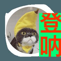 cat so funny