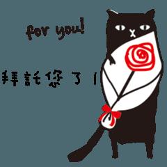 KOJI CAT