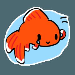 金魚好きのためのスタンプ