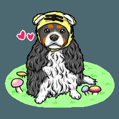 [LINEスタンプ] ☆キャバリアキングチャールズスパニエル☆ (1)