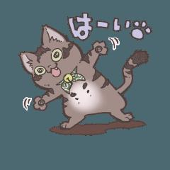 またたび猫コタロー