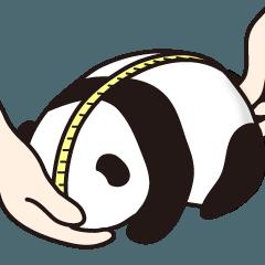 パンダ転がし(3)