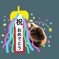 お祝い猫舎