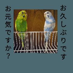 マリオとピノコとマータのLove Story