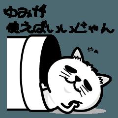 飼い猫ライムはゆみちゃんが大好き