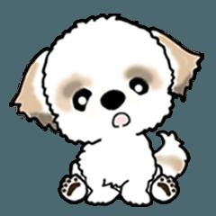 【大きめ文字】シーズー犬(英語)