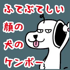 ふてぶてしい顔の犬のケンボー