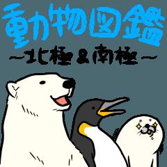 動物図鑑~北極&南極~
